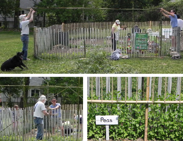 Building the trellis