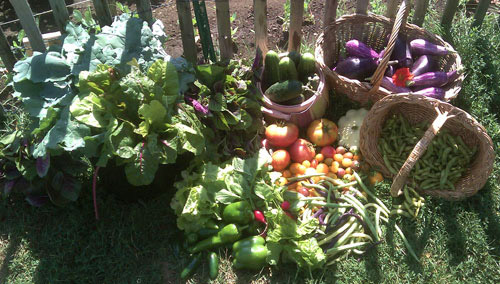 August 21 2010 harvest