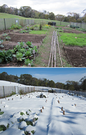 garden before and after snow